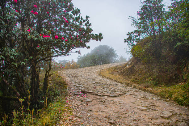 hiking trail to phalut