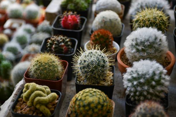 Cactus Nursery famous Tourist Places in Kalimpong