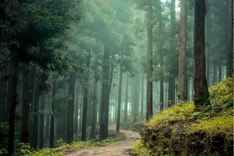 Lepchajagat  forest